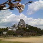 姫路の観光スポット ~姫路城の桜~